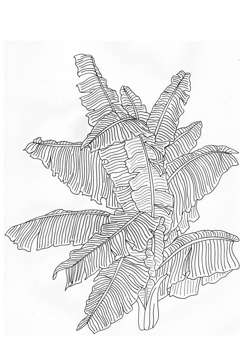 Rob Pepper Drawing of Ferns